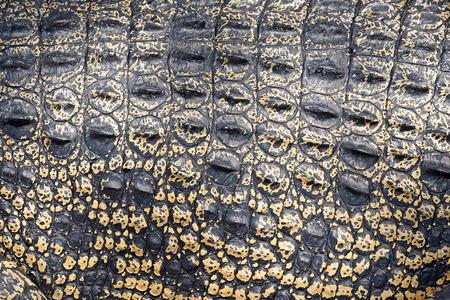 crocodile skin: Crocodile skin texture Stock Photo