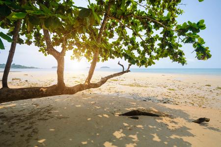 azul turqueza: Árboles y playa Foto de archivo