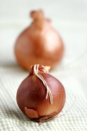 Two onions photo