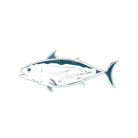 salmon fish vector logo and real illustration