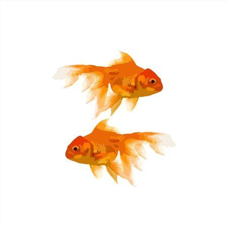 koi golden fish illustration