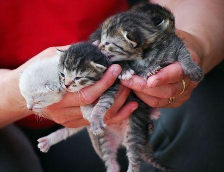 kittens Stock Photo - 4833936