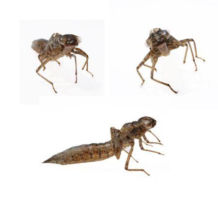 dragonfly larva Stock Photo - 5137769