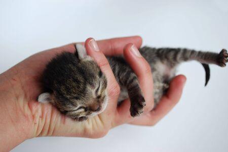 picture of newborn kitten photo