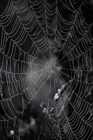 drow: spider web
