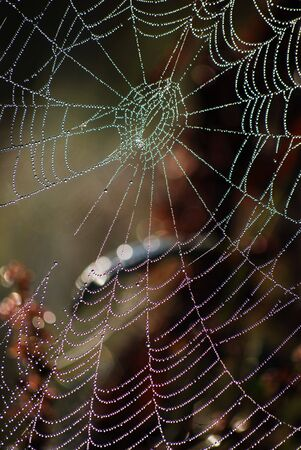 picture of a beauty web at morning Stock Photo - 5592686