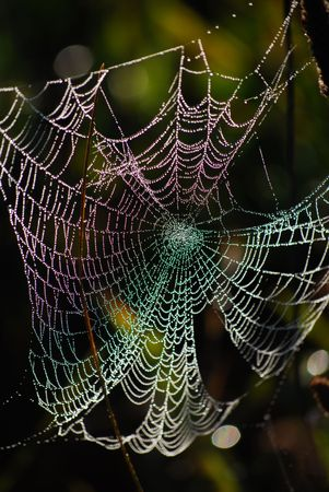 picture of a beauty web at morning photo