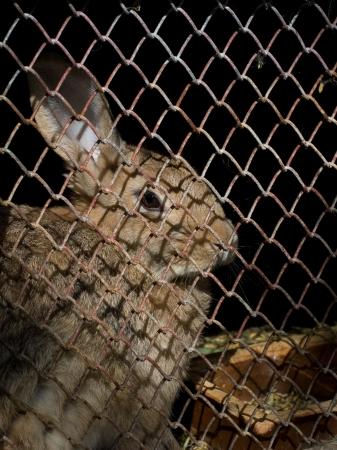 rabbit cage: coniglio nella gabbia