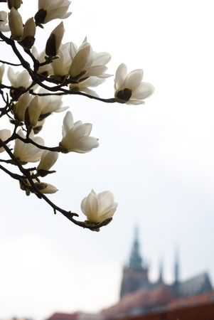Prague in the spring photo