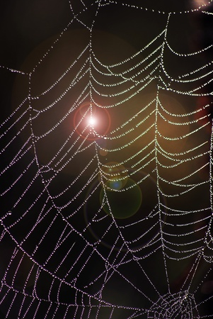 drow: picture of a beauty web at morning