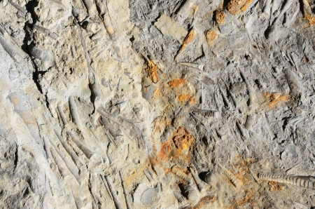 mineralized: fossils Stock Photo
