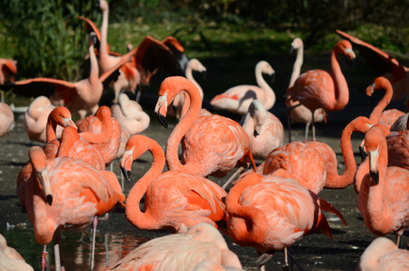 flamingos: flamingos