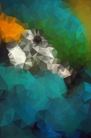 macaw: macaw illustration