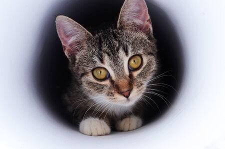 kitten in tunnel photo