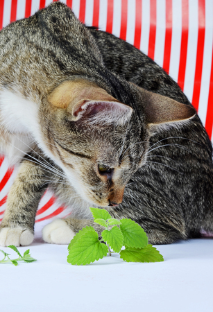 catnip: kitten and catnip