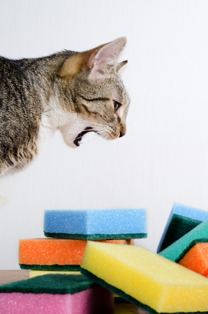 cat and cleaning sponges photo