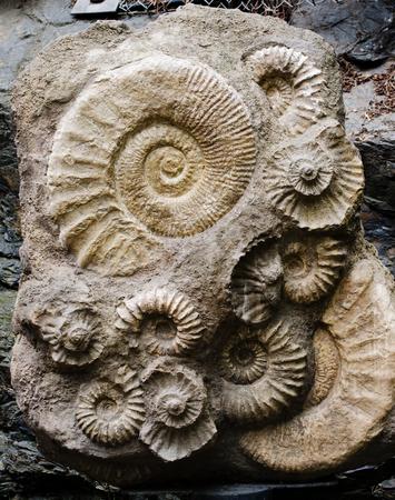 ammonite fossil Stock Photo