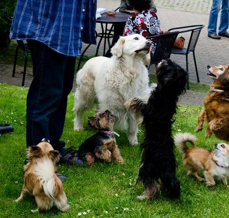 begging: begging dogs