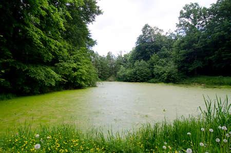 dirty: green dirty pond