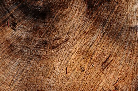 structure: structure of the wood