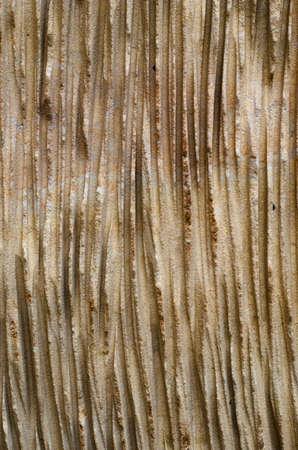sandstone: sandstone structure