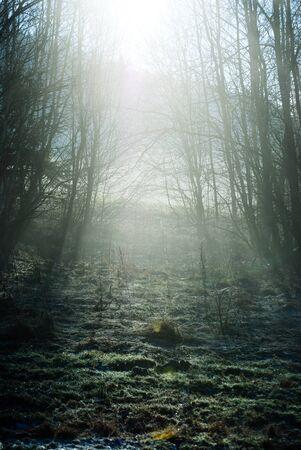 mist: mist