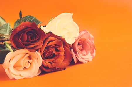 love rose: Different color roses ,Negative film effect. Selective focus Stock Photo