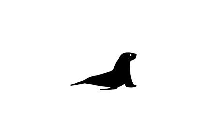 Silhouette of seal. Marine animal vector illustration.
