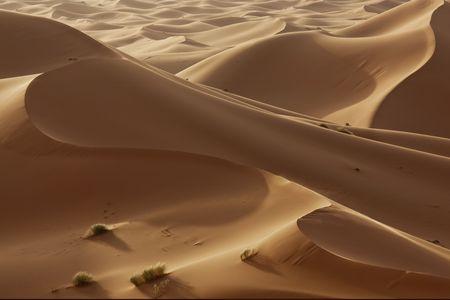 hight: hight sand dunes in the Sahara desert in evening light