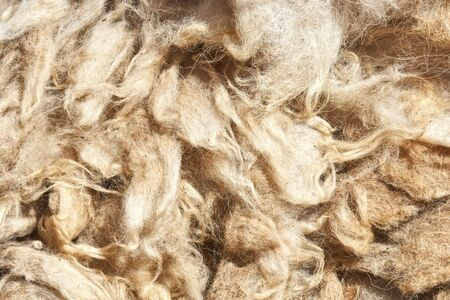 unspoiled: a close-up of brown untreated sheep wool  Stock Photo