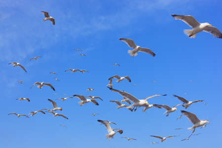 wingspread: Many flying seagulls against blue sky.