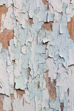 damaged wall by termite photo