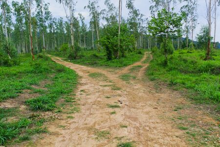 country crossroad in forest for decision,which is the right way to go photo