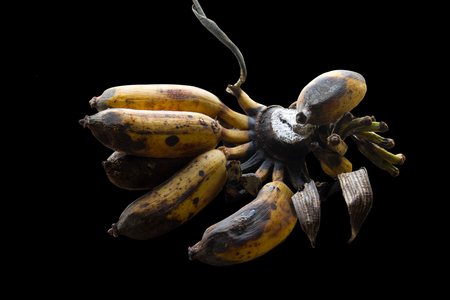 Rotten Banana isolated on a black background.