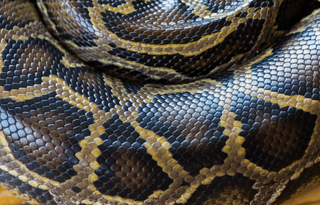 Patterned texture on the skin of the Reticulated python. Фото со стока