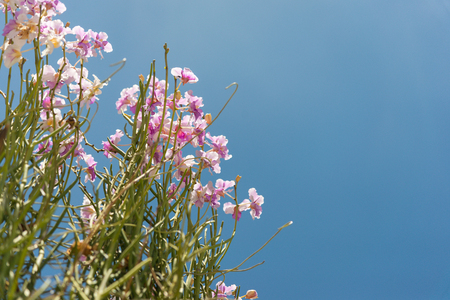 Pink Dendrobium orchids are blooming beautifully in the garden, on a background blue sky. Banco de Imagens