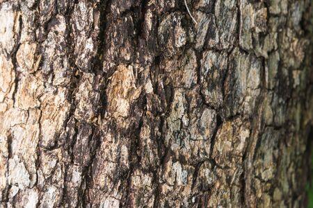 tree bark of Burmese Padauk used as a background texture. Фото со стока