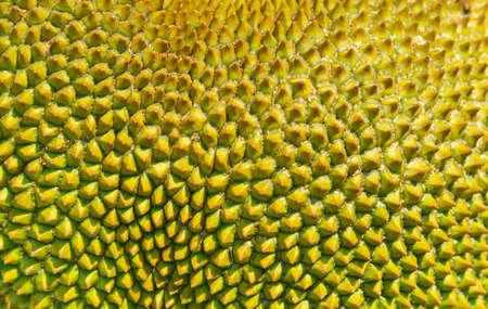 Jackfruit's peel texture a small button consecutive yellowish green of young jackfruit.