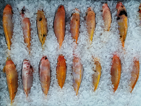 Fresh fish on ice, convenience store. Stock Photo