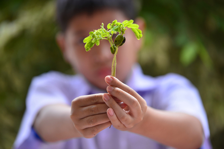 Boy hand holding young plant in hands against spring green background. Ecology concept