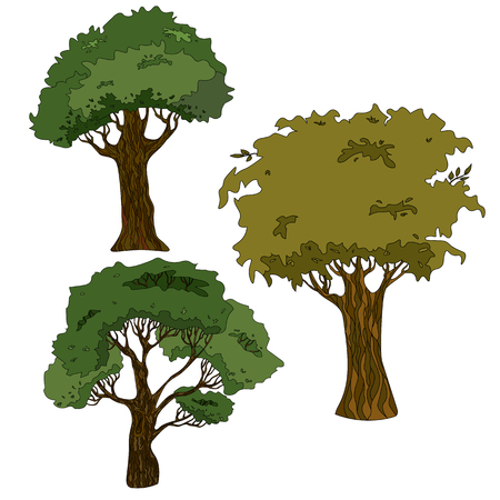 Vector drawing of a tree with a crown and a trunk
