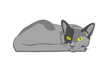 The cat Stock Vector - 16589149