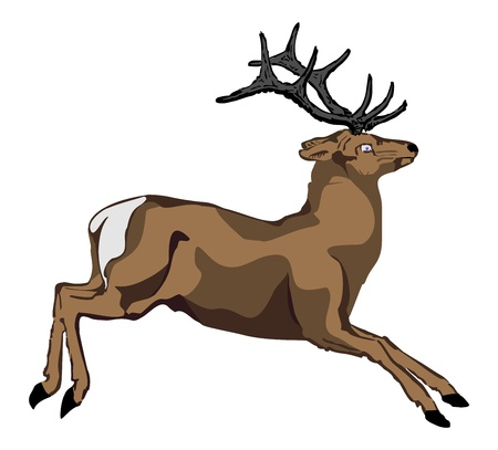 hoofs:  The vector image of a deer skipping to the right. Illustration