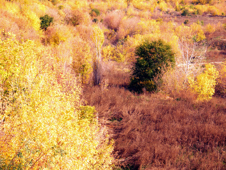 Photo landscape. View of autumn nature from a height. Wild nature