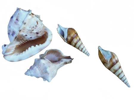 The photo of four seashells isolated on a white background.