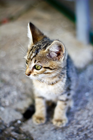 Small gray kitten in a gray environment, shallow focus on face Stock Photo