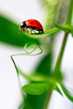 A little lady beetle. Ðœacro shoot of ladybug on the grass Stock Photo