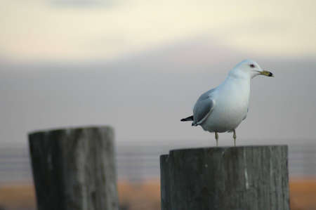 A gull stands on a post at a harbor as dusk falls.