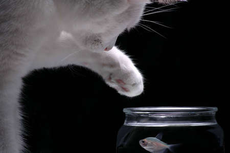 A white cat reaches a paw into a fish bowl to try and catch a fish.