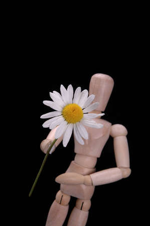 suitor: An artists manikin holding out a daisy. Stock Photo